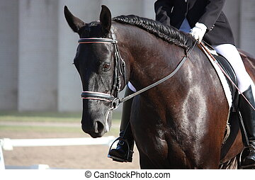 Beautiful sport horse portrait during dressage test in...
