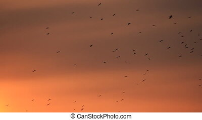 Black birds silhouettes