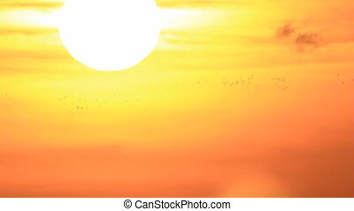 Birds migration - Many birds flight at big bright sun disk...