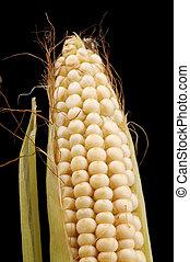 Raw corn closeup