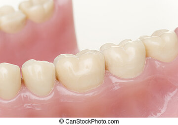 tooth model - isolated tooth model