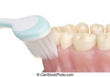oral hygiene - correct use of the toothbrush for perfect...