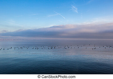 Lake Geneva Winter Morning - A group of birds in the a...