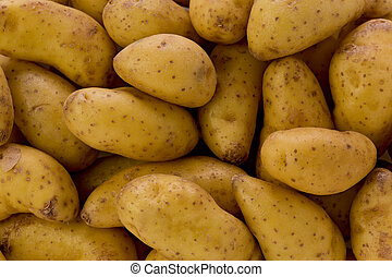 Fingerling Potatoes - Background texture of several raw...