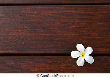 file of frangipani flower on wood t