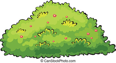 Green bush - Illustration of a green bush on a white...
