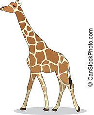 vector giraffe - vector illustration of giraffe