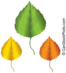 Birch leaf - A birch leaf in green, yellow and orange...