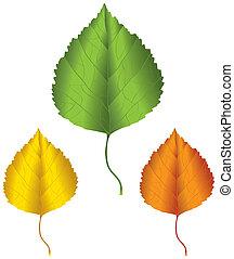 Birch leaf - A birch leaf in green, yellow and orange...