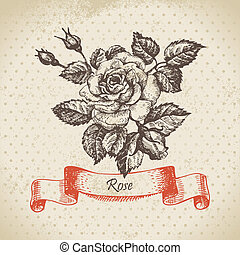 Rose Hand drawn vintage design