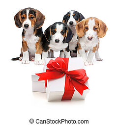 Party dogs - Four puppies from a puppy litter behind the...