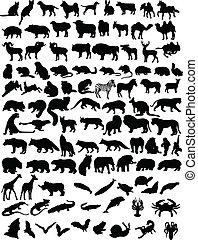 100, animaux