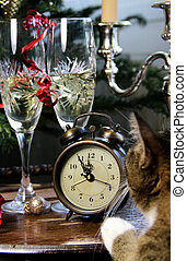 New Year celebration and funny cat - Funny cat waiting for...