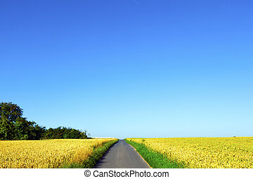 bicycle lane through corn fields under blue sky