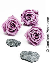 Pink roses and stones on a white background