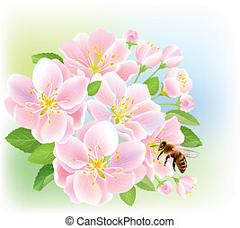 Flowering branch of apple with bee