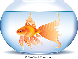 Goldfish in aquarium - Illustration of goldfish in aquarium...