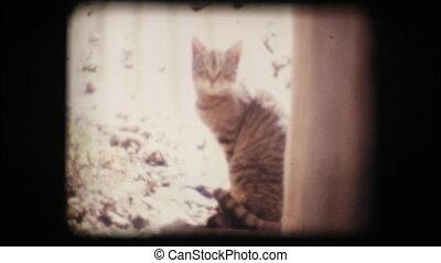 Vintage 8mm. Cat looking