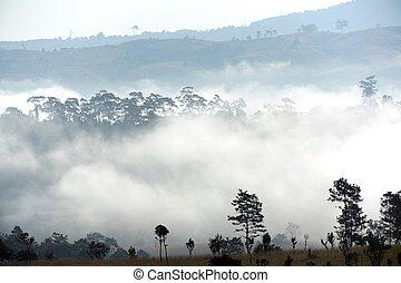 Morning fog landscape