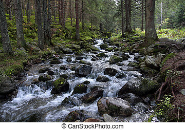 Forest stream - Rapid stream in the coniferous forest