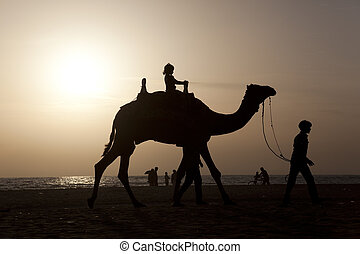 backlighting - A girl riding a camel at sunset