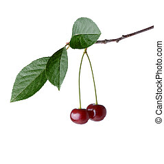 cherry - two cherries hanging on branch isolated on white