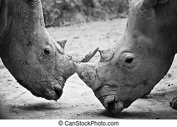 Rhino , black and white