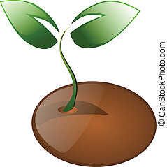 Little plant and seed isolated - Little plant and seed...