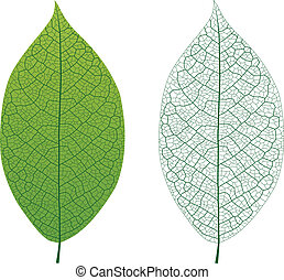 Leaf Vein - Layered vector illustration of Leaf Vein