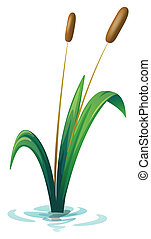 A plant - Illustration of a plant on a white background