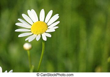 white wild flower spring scene
