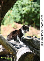 Black kitten sitting on the tree branch meowing