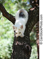 Cute white kitten climbing down from the tree - Cute white...