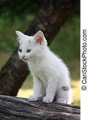 White kitten sitting on the tree branch meowing
