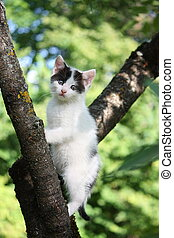 Small cute kitten climbing the tree in the garden