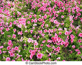 colorful bright flower bed in the garden