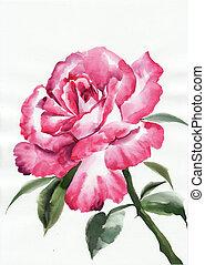 Rosa gambo disegno immagini e archivi - Serenelle fiori ...