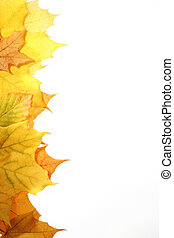 Autumn leaves - leaves in beautiful autumn colours on white...