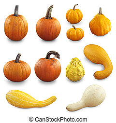 Fall Vegetables - Pumpkins and gourds on white background.