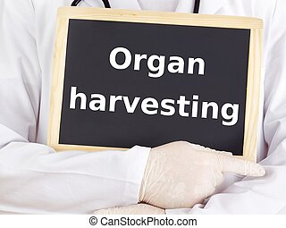 Doctor shows information: organ harvesting
