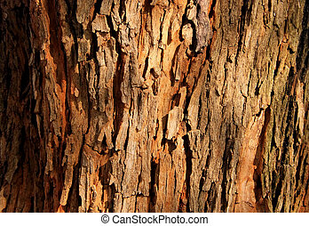 Tree Bark Background - Rough Grooved Red Brown Tree Bark...
