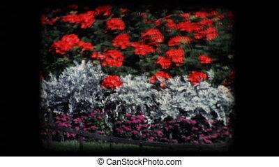 Vintage 8mm. Public flower garden