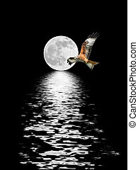 Eagle Flying at Full Moon - Red Kite eagle flying in front...