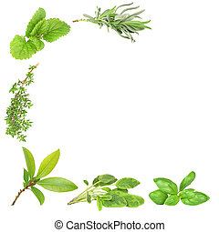 Herb Varieties - Abstract of herb leaf sprigs of lavender,...