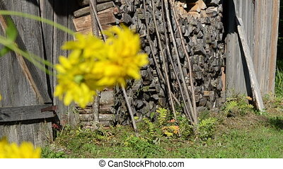 yellow flower house rural - old rural farm building house...