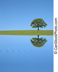 Oak Tree Reflection - Oak tree in full leaf in summer in a...