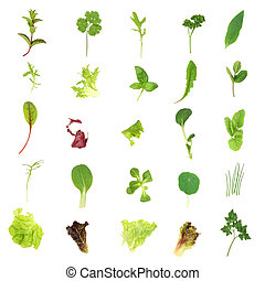 Salad Lettuce and Herb Leaves - Selection of fresh salad...
