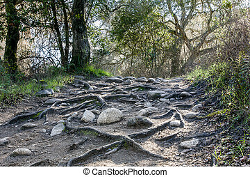 Rain Has Eroded the Trail, Leaving Rocks and Gnarled Tree...