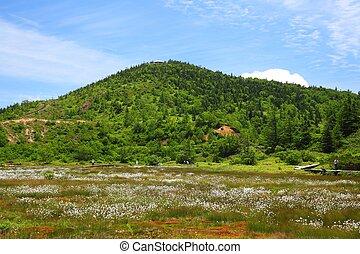 Cotton grass and mountain, Mt. Kusatsu shirane, Japan