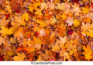 Autumn leaves - Dry autumn leaves background